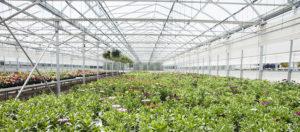 Genrep Greenhouse solutions