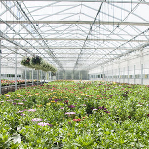Genrep Greenhouse solutions